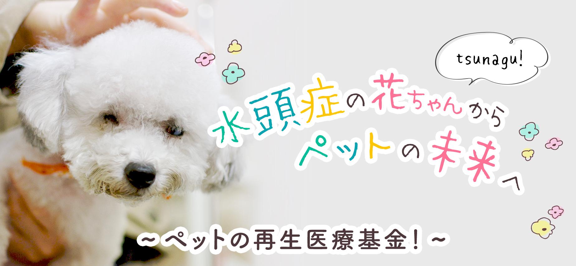 水頭症の花ちゃんからペットの未来へtsunagu!〜ペットの再生医療基金!〜