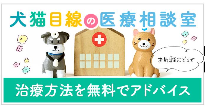 犬猫目線の医療相談室